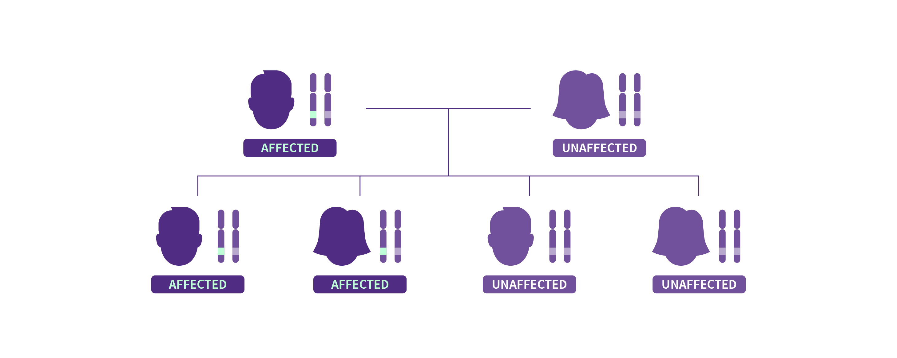 A family tree showing autosomal dominant inheritance pattern of Dravet syndrome.