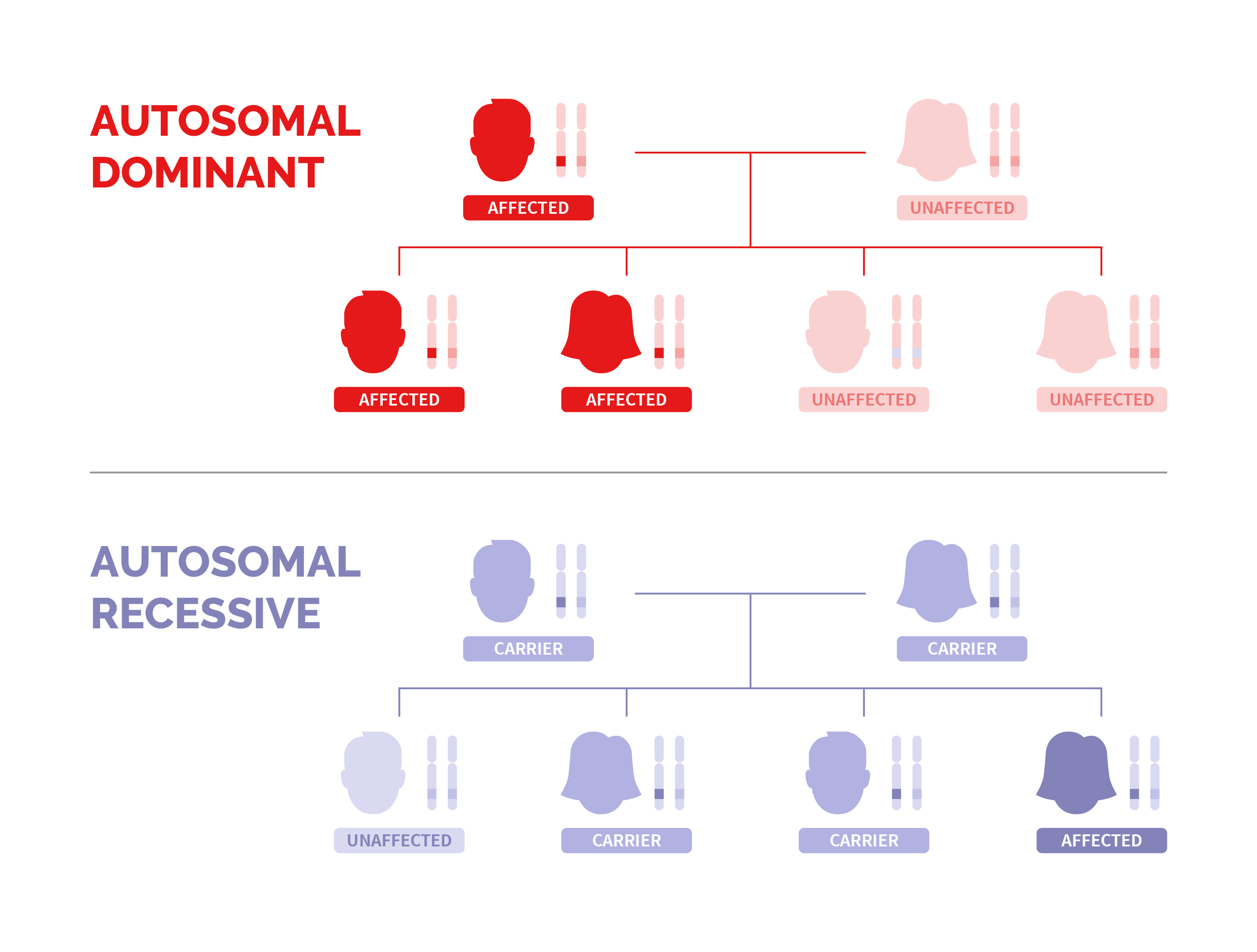 Two family trees showing autosomal dominant pattern and autosomal recessive inheritance pattern of Long QT syndrome