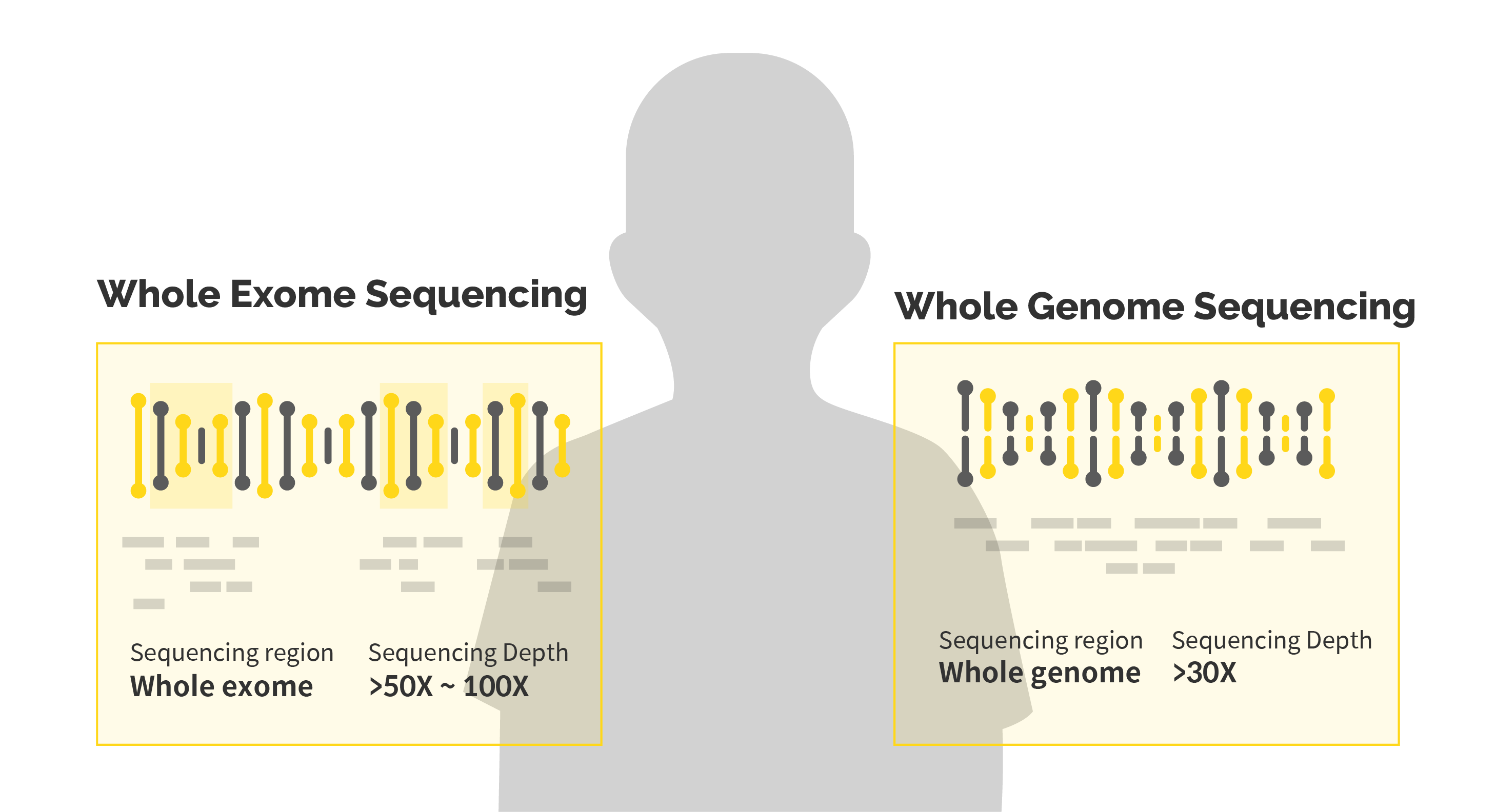Two DNA double helix explaining whole exome sequencing and whole genome sequencing