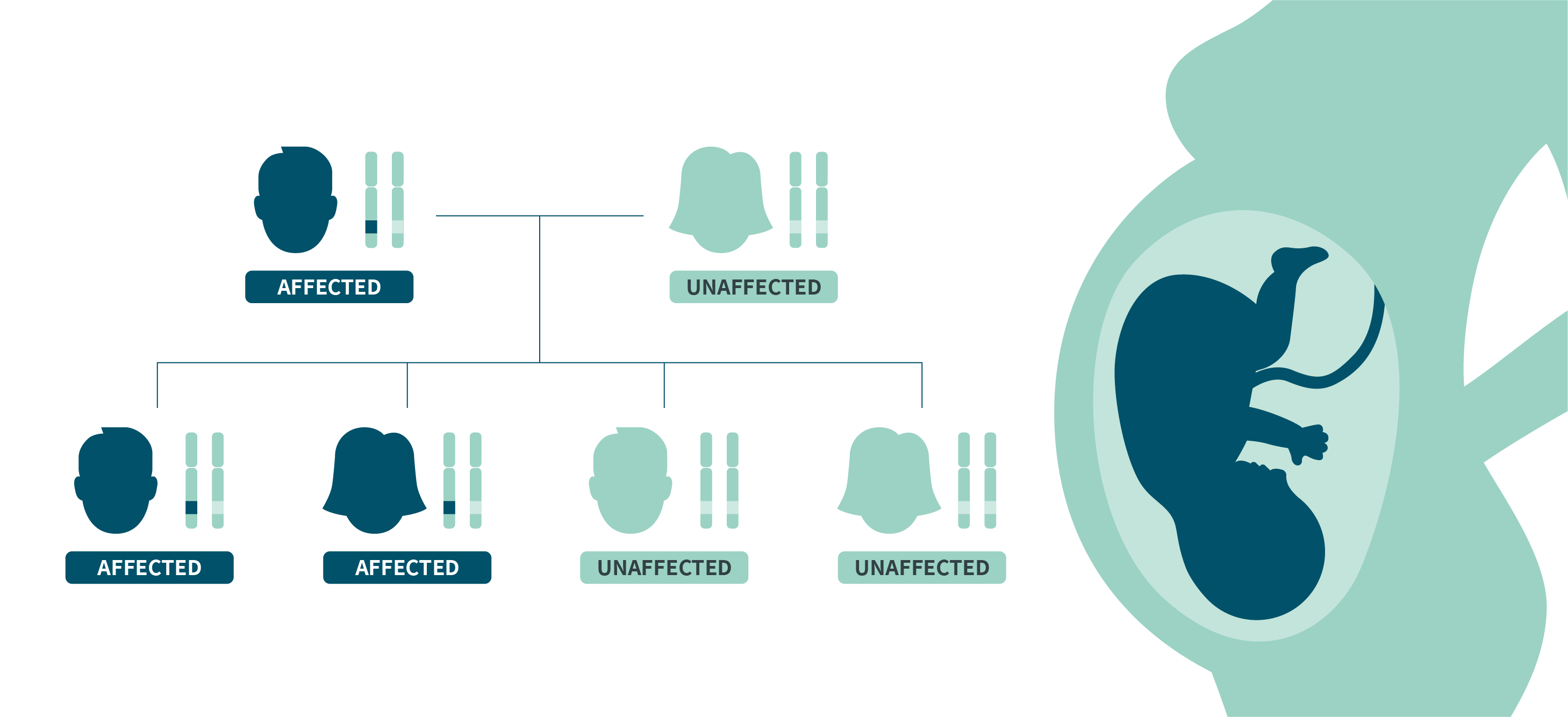 A family tree showing an autosomal dominant inheritance pattern.