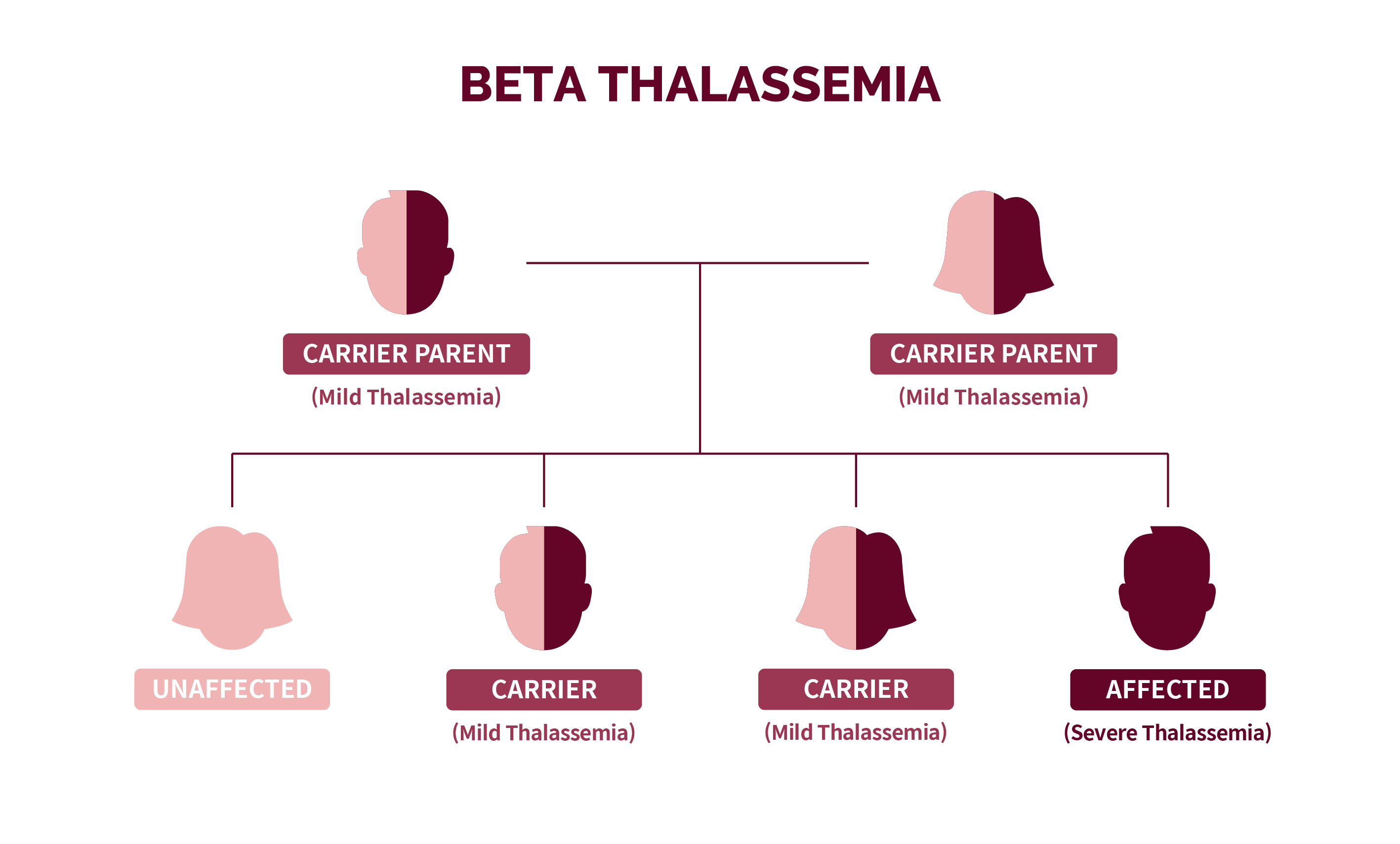 A family tree showing the autosomal recessive inheritance pattern of Beta thalassemia
