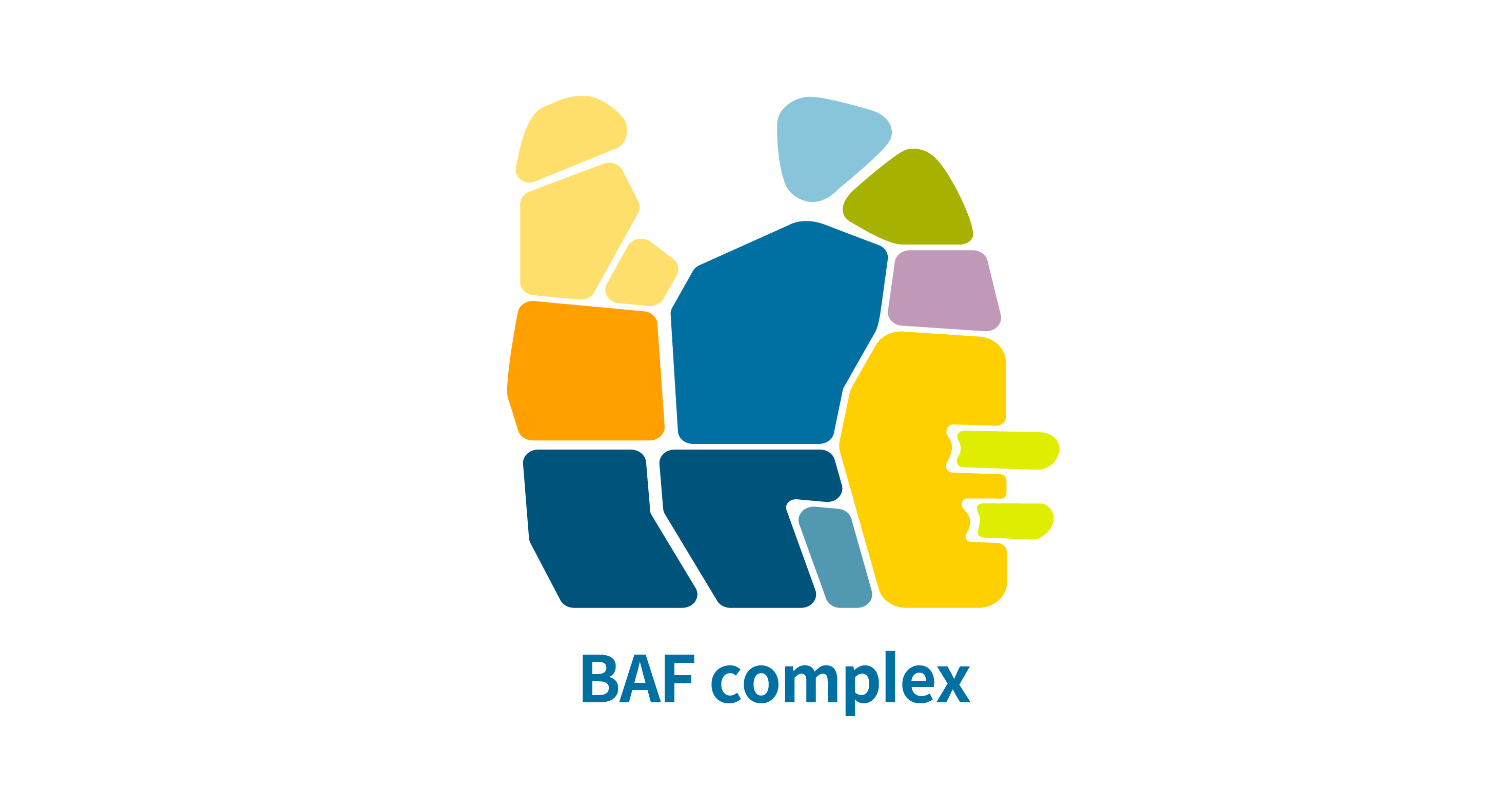 BAF complex figure, showing that the genetic variants on genes related to the BAF pathway can cause Coffin-Siris syndrome.