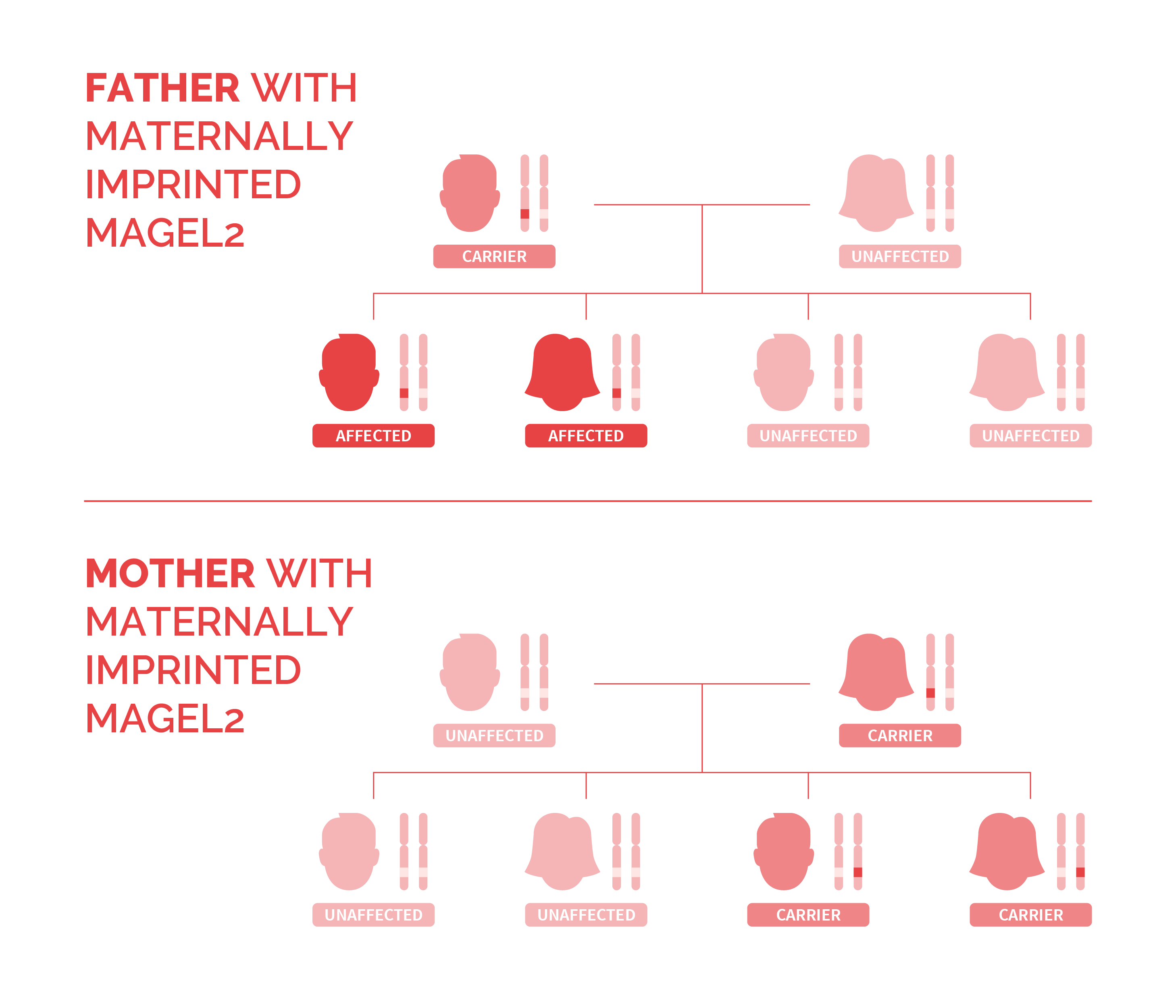 Two family trees showing the autosomal dominant inheritance pattern of Schaaf-Yang syndrome in each case of parents affected.